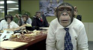 Sujetos del grupo A, incapaces de resolver los problemas y concentrándoseen las bananas