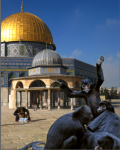 Monos salvajes sionistas entrenados para matar celebrando su victoria sobre el Domo de la Roca